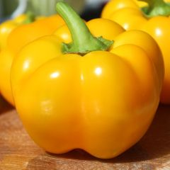 Foto: Paprika 'Yolo Wonder Yellow'
