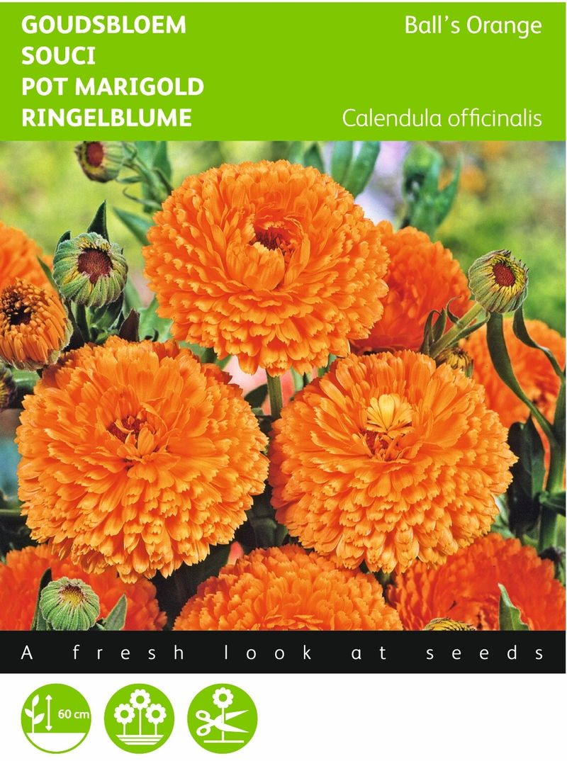 Foto: Goudsbloem 'Ball's Orange'
