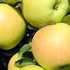 Foto: Appel 'Golden Delicious'