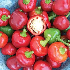 Foto: Paprika 'Sweet Red Cherry'