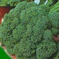 Foto: Broccoli 'Waltham'