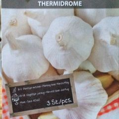 Foto: Knoflook 'Thermidrome'