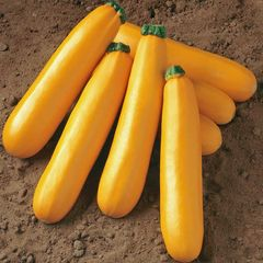 Foto: Courgette 'Golden'