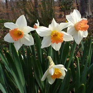 Foto: Narcis 'Accent'