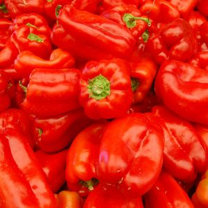 Foto: Paprika 'King of the North'