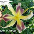 Foto: Daglelie 'Apple Swirl'