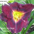Foto: Daglelie 'Barcelona Night'