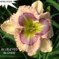 Foto: Daglelie 'Blue Eyed Blonde'