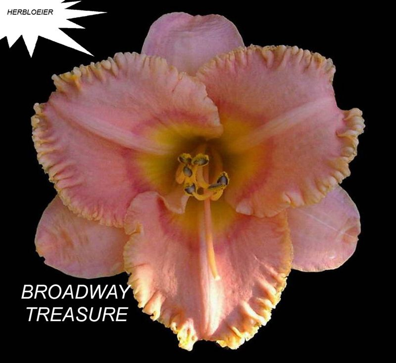Foto: Daglelie 'Broadway Treasure'
