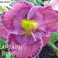 Foto: Daglelie 'Captain Blue'