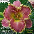 Foto: Daglelie 'Celtic Magic'