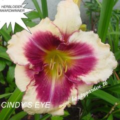 Foto: Daglelie 'Cindy's Eye'