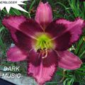 Foto: Daglelie 'Dark Music'