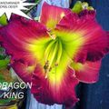 Foto: Daglelie 'Dragon King'