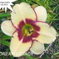 Foto: Daglelie 'Dream Legacy'