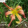 Foto: Daglelie 'Echo Canyon'