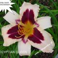 Foto: Daglelie 'Egyptian Queen'