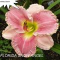 Foto: Daglelie 'Florida Snow Angel'