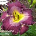 Foto: Daglelie 'I Remember You'
