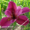 Foto: Iris 'News Brief'