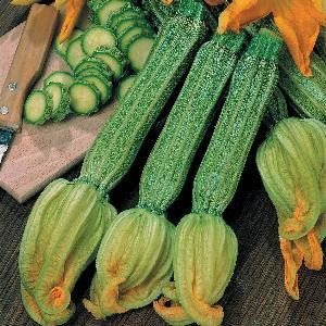 Foto: Courgette 'Romanesco'
