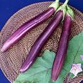 Foto: Aubergine 'Banate King'