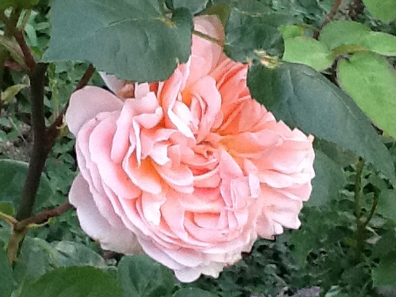 Foto: Roos 'Evelyn'