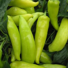 Foto: Peper 'Hungarian hot wax'