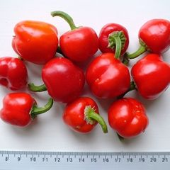 Foto: Paprika 'Mini Bell Red'