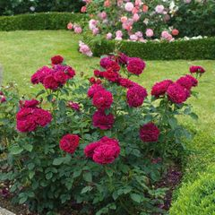 Foto: Roos 'Darcey Bussell'