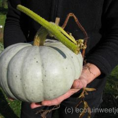 Foto: Pompoen 'Crown Pumpkin'
