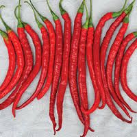 Foto: Peper 'Cayenne Joe's Long'