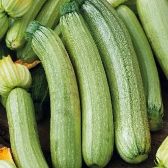 Foto: Courgette 'Genovese'