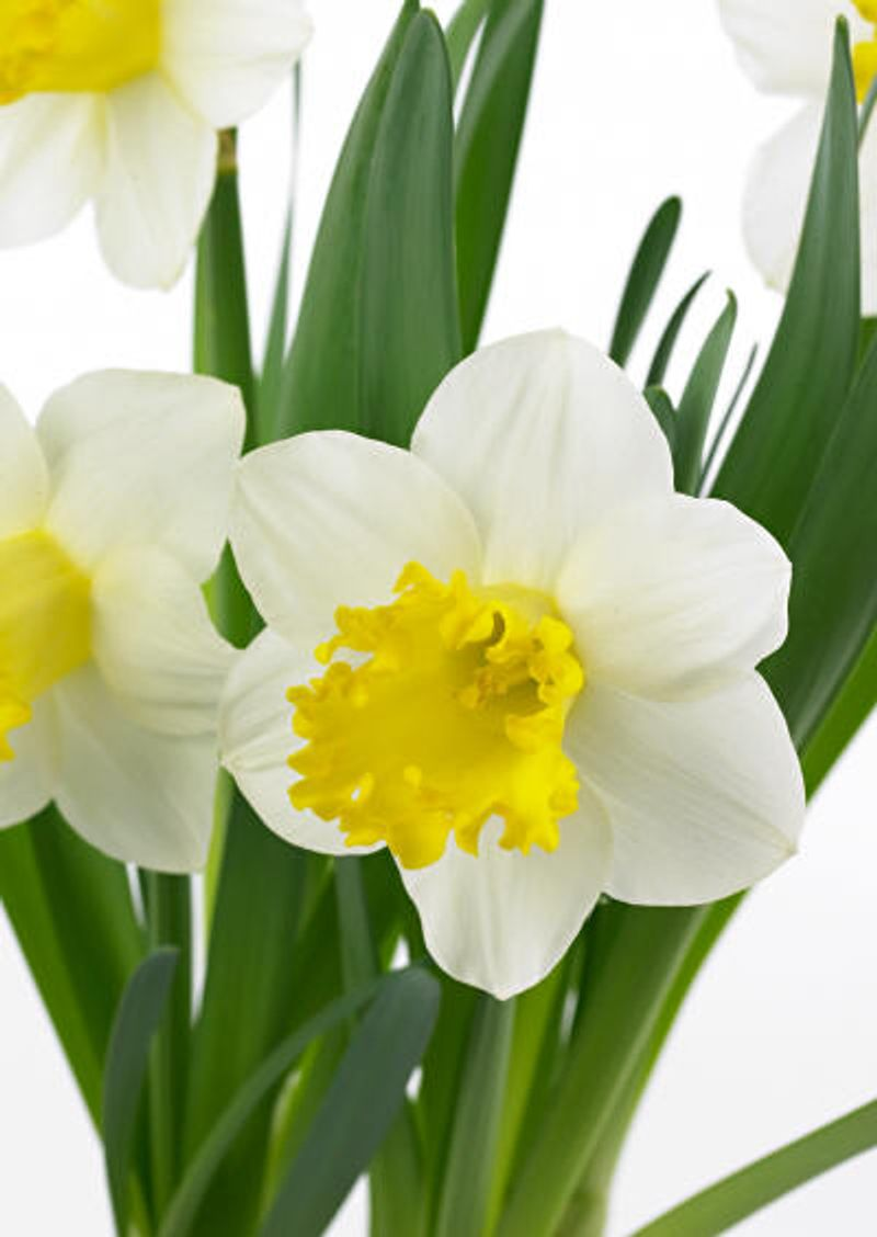 Foto: Narcis 'Attraction'