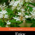 Foto: Liguster 'Fragrant Cloud'