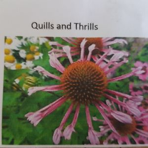 Foto: Zonnehoed 'Quills and Thrills'