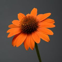 Foto: Zonnehoed 'Sombrero Adobe Orange'