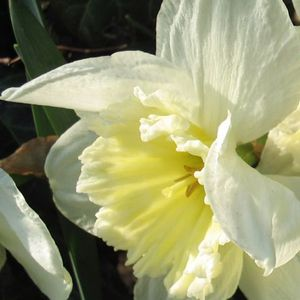 Foto: Narcis 'Ice Follies'