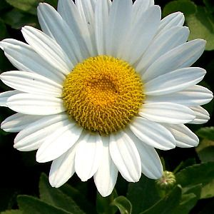 Foto: Margriet 'Becky'