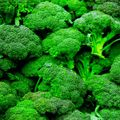 Foto: Broccoli 'Lord F1'