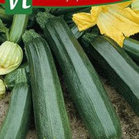 Courgette Black Beauty Superba