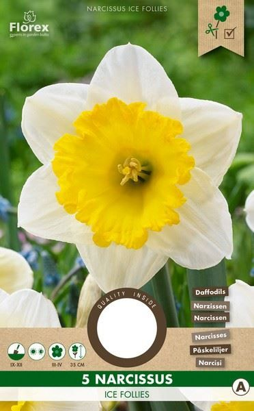 Narcissen - Ice Follies - 5 stuks - Narcissus Large Cupped