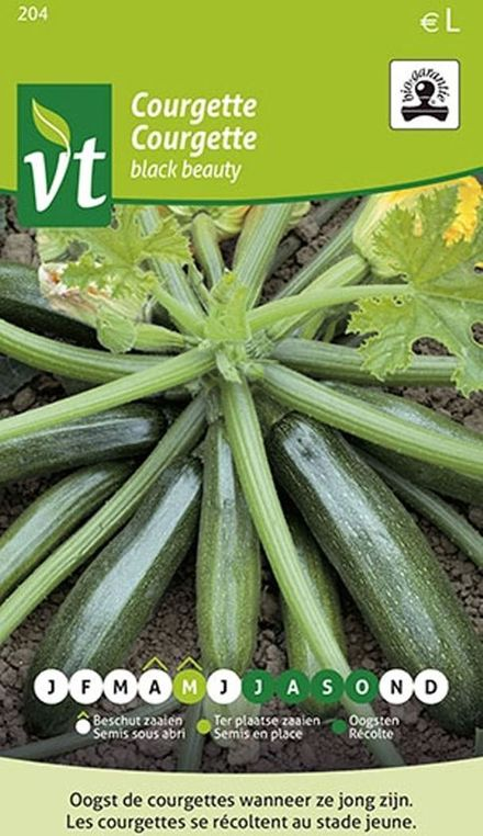 Bio Courgette Black Beauty