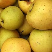MALUS D. 'GOLDEN DELICIOUS'-  Appel Struik in pot