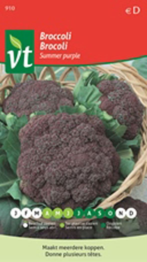 Vt Zaden Broccoli Summer Purple