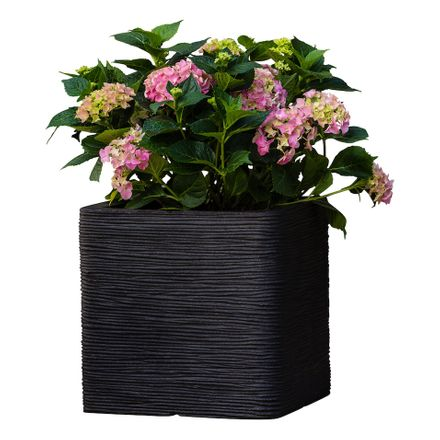 Plantenmatch Hortensia (Incl. Capi Pot) - Hydrangea Macrophylla Bouquet Rose
